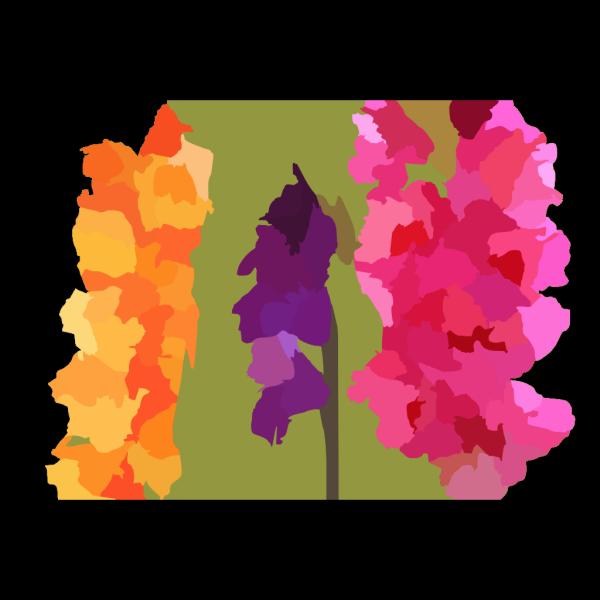 Gladiola Vector PNG Clip art