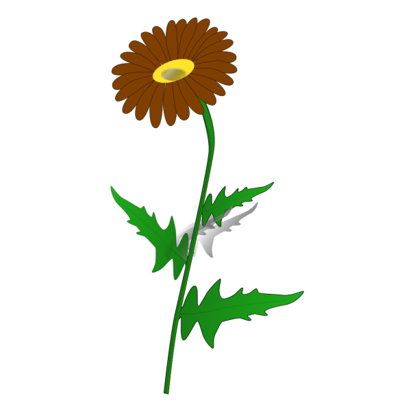 Gray Brown Daisy PNG Clip art