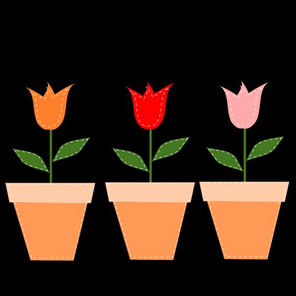 Tulips In Pots PNG Clip art