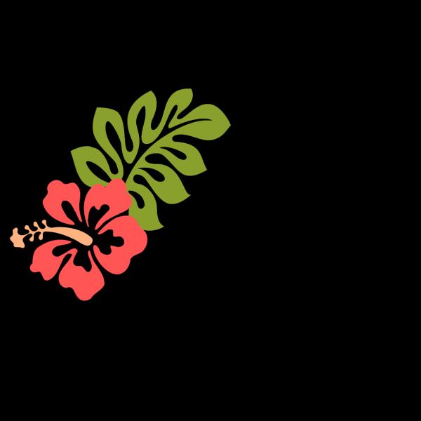 Coral Hibiscus PNG Clip art