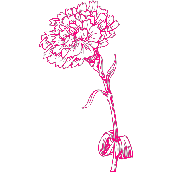 Pink Carnation PNG icons