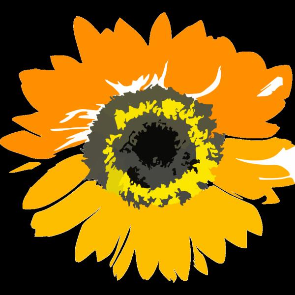 Sunflower Flower Clipart PNG Clip art