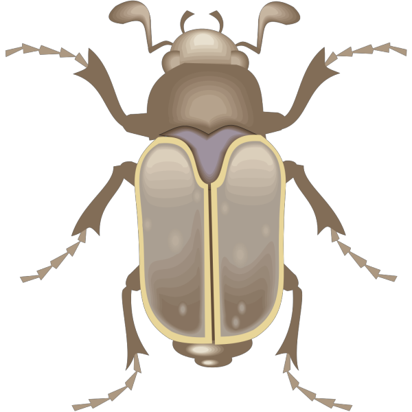 Beetle Art PNG images