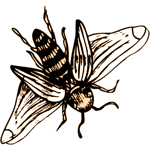 Bee Drawing PNG Clip art