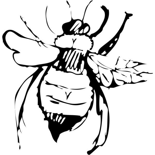 Top View Of A Bee Drawing PNG Clip art
