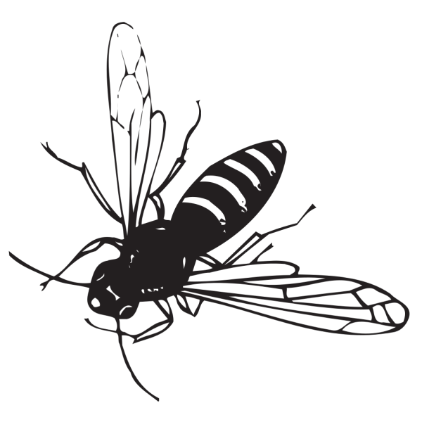 Bee Flying PNG Clip art