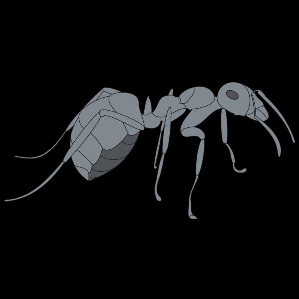 3d Gray Ant PNG Clip art