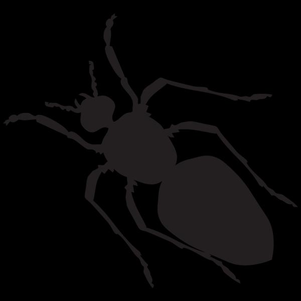 Black Ant Silhouette PNG Clip art