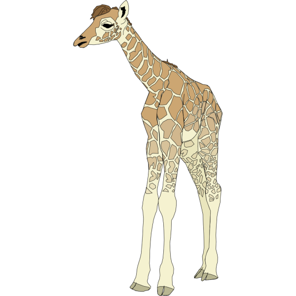 Baby Giraffe PNG images