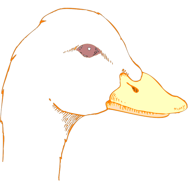Duck Head Drawing PNG Clip art