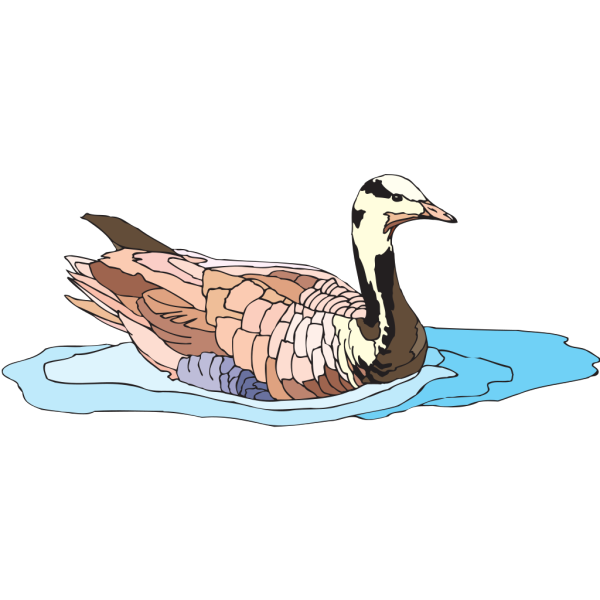 Colorful Swimming Duck PNG images