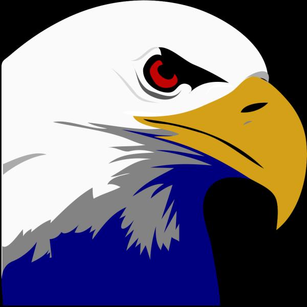 Soaring Bald Eagle PNG Clip art