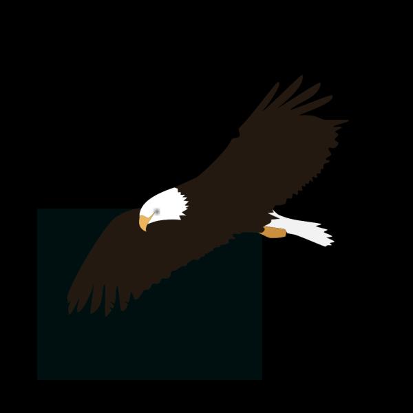 Soaring Eagle PNG Clip art