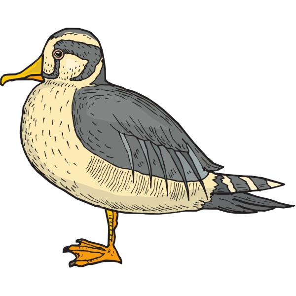 Stiff Feathered Duck PNG Clip art