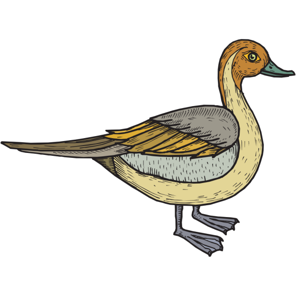 Feathered Duck PNG Clip art