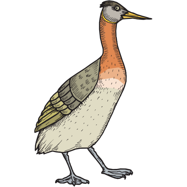 Walking Feathered Duck PNG image