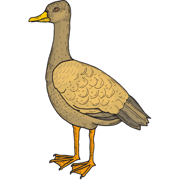 Bird Standing Tall PNG images