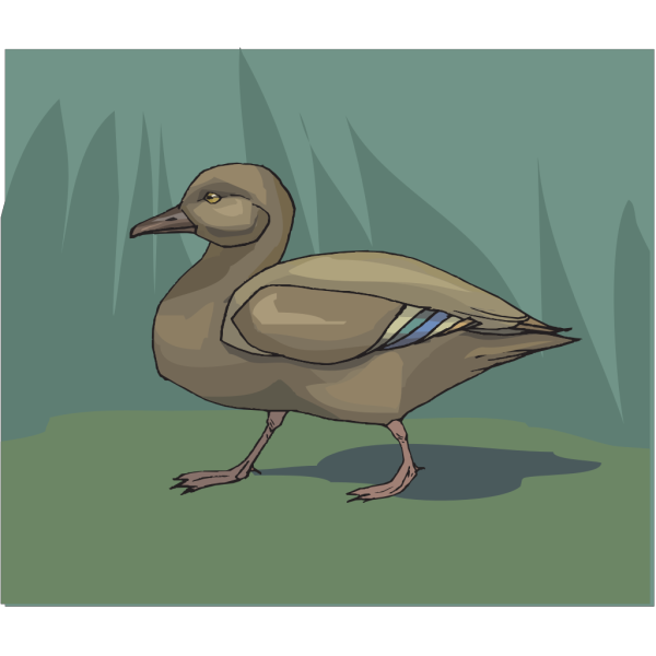 Duck Walking In Grass PNG Clip art