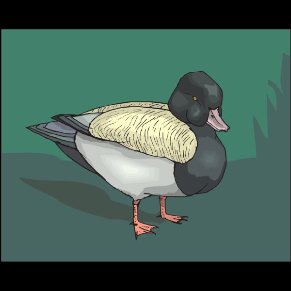 Duck Standing In Grass PNG Clip art