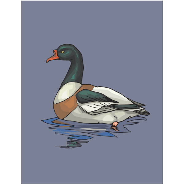 Green And White Duck In Water PNG Clip art