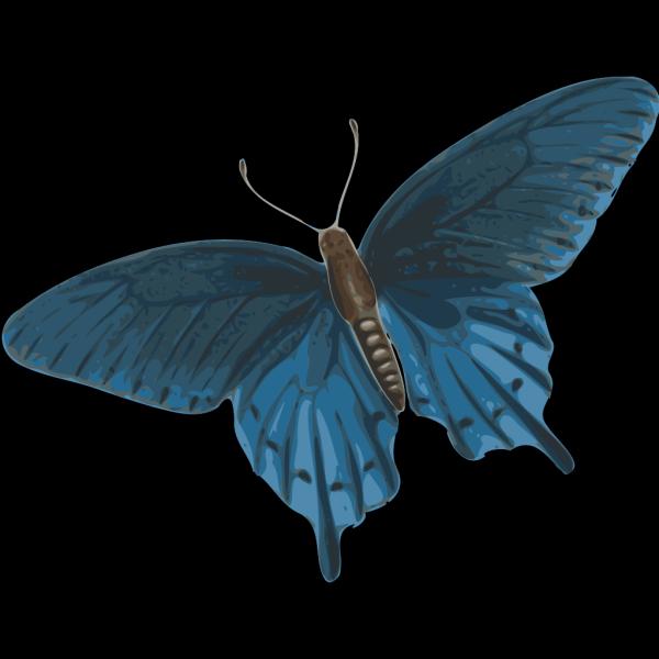 Butterfly Art PNG Clip art