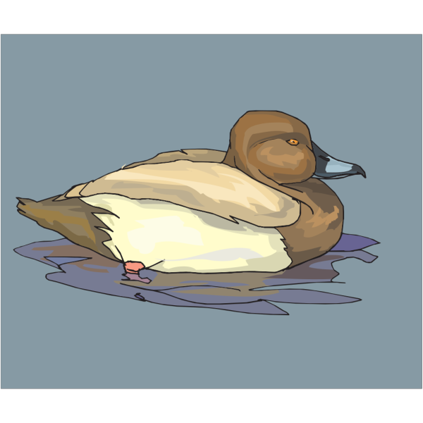 Brown Swimming Duck PNG Clip art