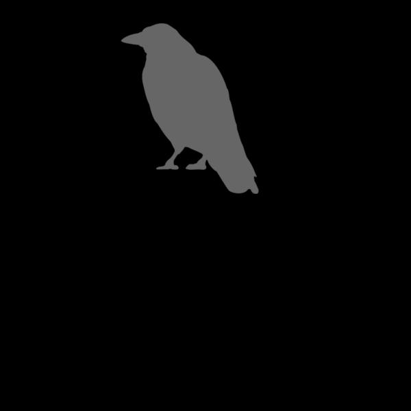 Gray Crow PNG Clip art
