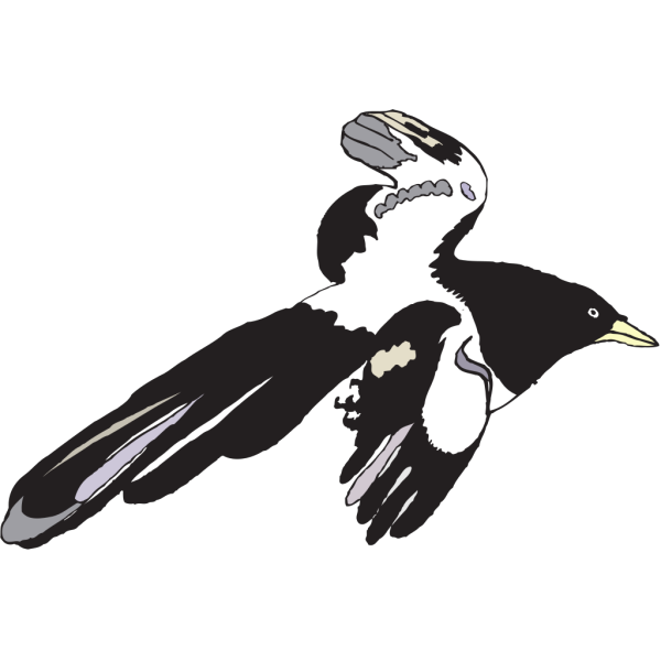 Flying Black And White Bird PNG Clip art