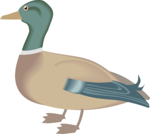 Regular Duck Digital Art PNG images