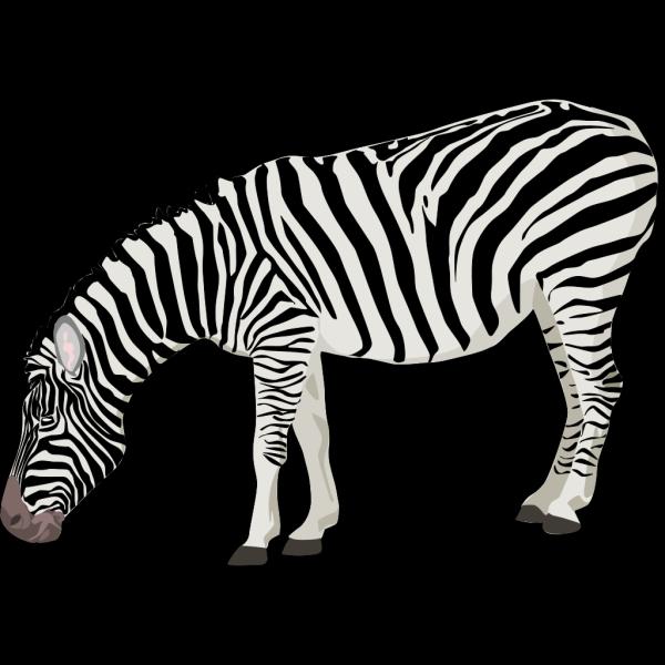Zebra PNG Clip art