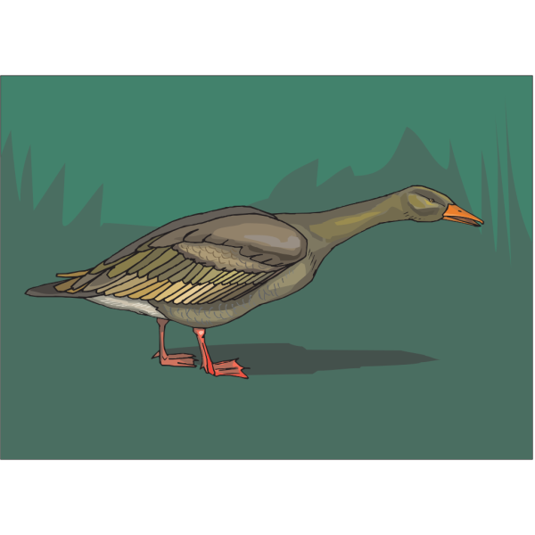 Curious Green Duck PNG images