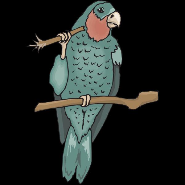 Amazon Parrot PNG Clip art