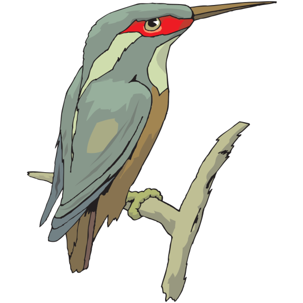 Perched Kingfisher PNG images