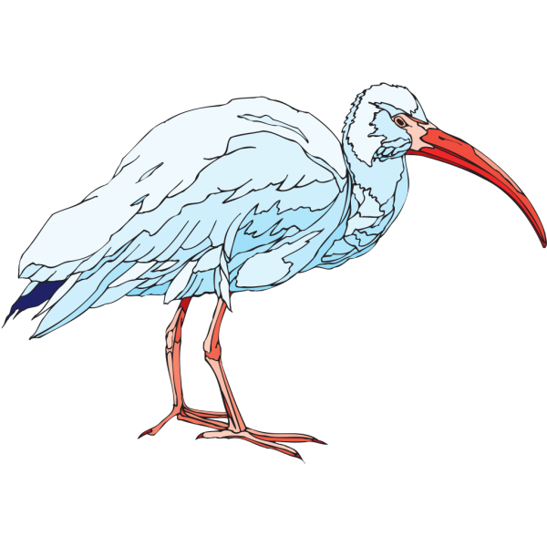 White Ibis PNG images