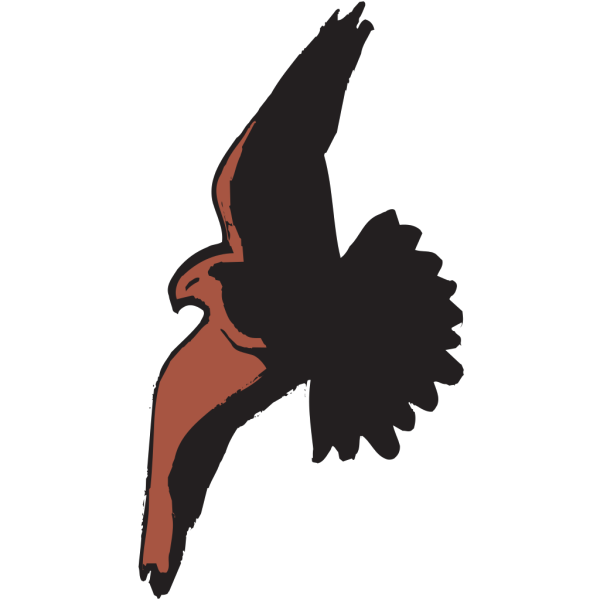Hawk Flying With Shadow PNG images