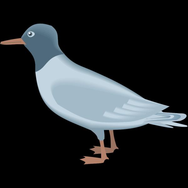 Blue Gull PNG Clip art