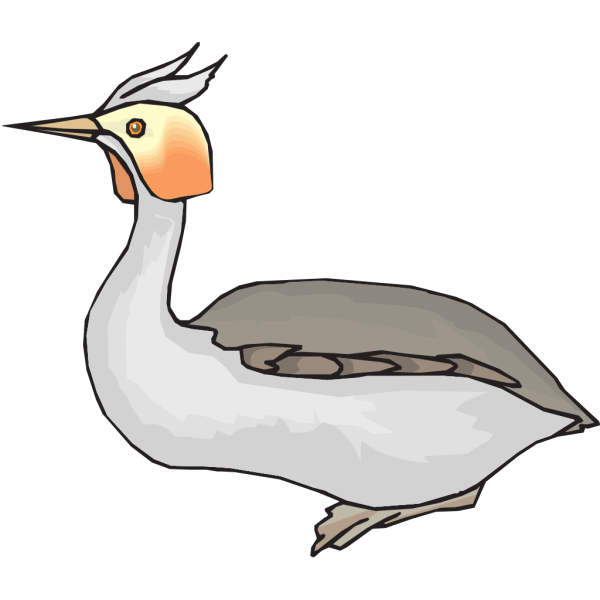 Grebe PNG images