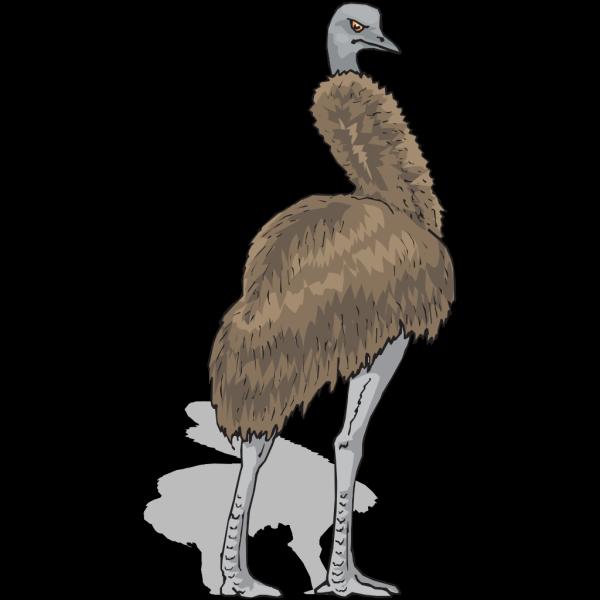 Emu PNG Clip art