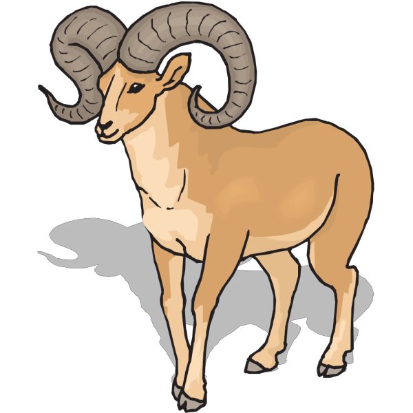 Bighorn Sheep Front View PNG images