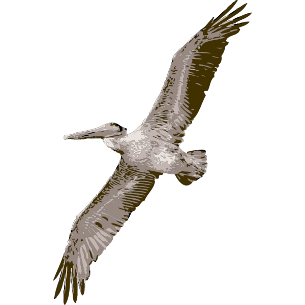 Pelican PNG images