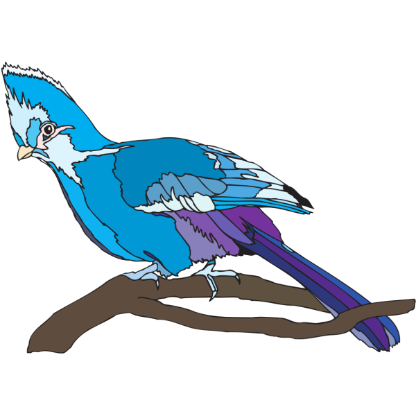 Turaco PNG Clip art