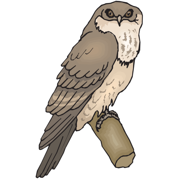Tawny Frogmouth PNG Clip art