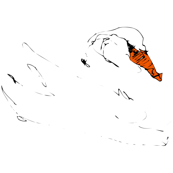 Swan Sketch PNG images