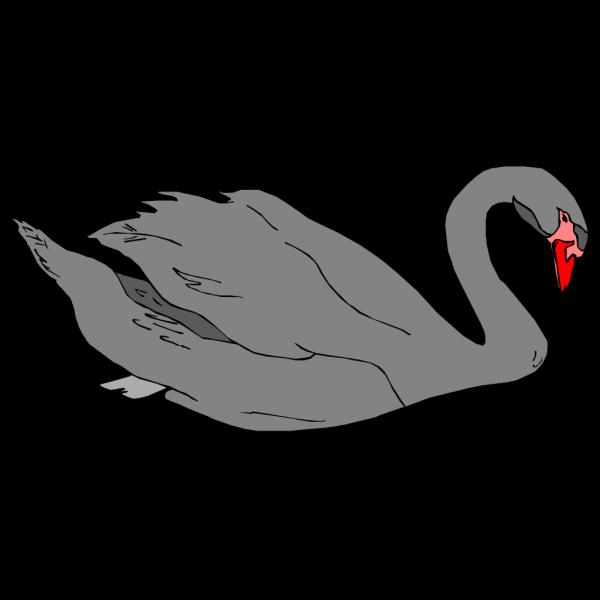 Black Swan PNG Clip art