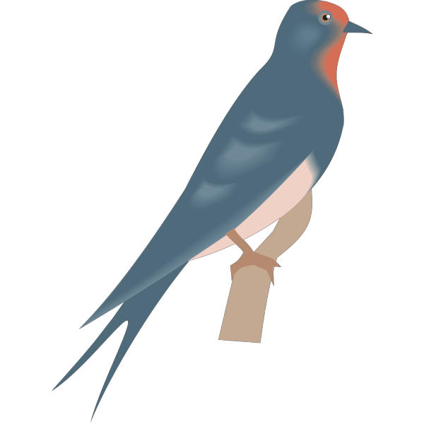 Perched Swallow PNG Clip art