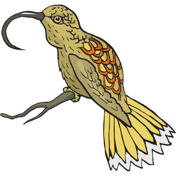Sunbird PNG images