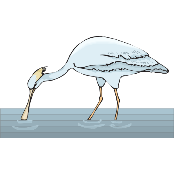Spoonbill In Water PNG Clip art