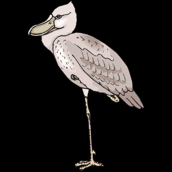 Shoebill PNG Clip art
