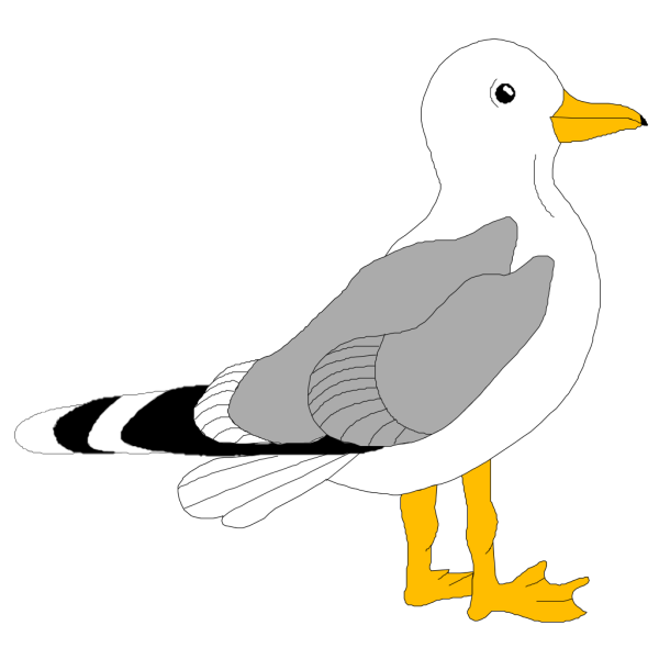 Seagull PNG Clip art