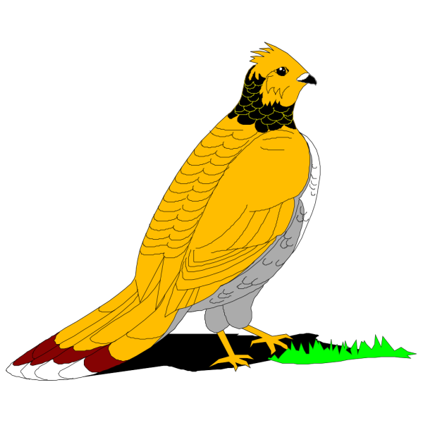 Ruffled Grouse PNG Clip art